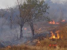 incêndios para caçar ratazanas