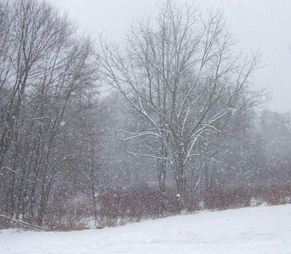 [winterlandscapesm.jpg]