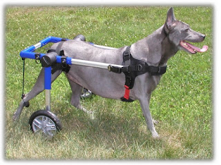 How To Build A Dog Wheelchair - Home Healthcare