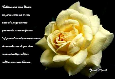 foto de una rosa sobre fondo negro, el texto del poema de Martí se halla impresionado en él