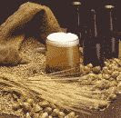 color photograph of beer and its raw ingredients