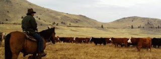 Western cattle ranching color photograph