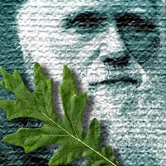 Carlos Darwin