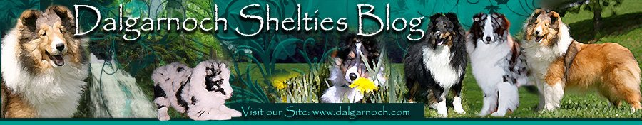 Dalgarnoch Shelties