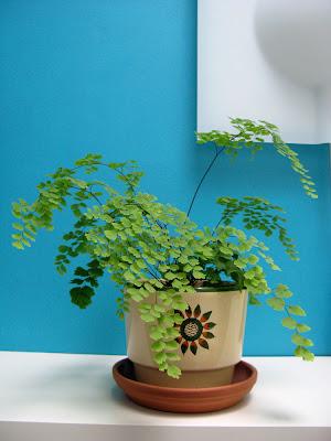 Pretty indoor plants la in bloom - Pretty indoor plants ...