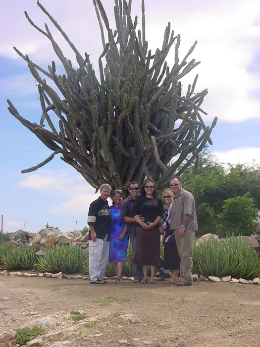 World's Largest Cactus I believe We Were Told