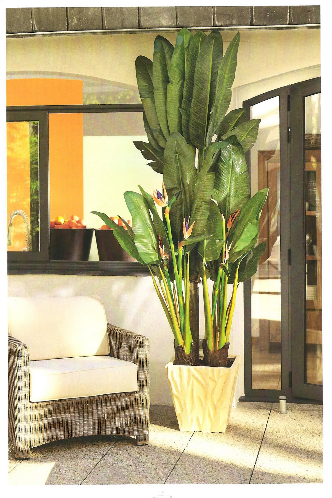 Decoraci n artico ideas y consejos con flores y plantas - Plantas de interior altas ...