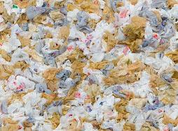 Sacos de lixo que poluem...