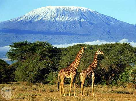 The beauty of Mount Kilimanjaro in Tanzania