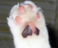 kitty paws series #8