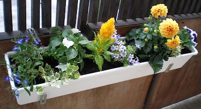 balcony flowers dahlia ivy lobelia petunia
