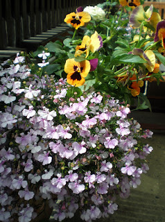flower box purple lobelia purple and orange pansies