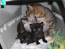 Rita y sus bebés ya tienen un hogar
