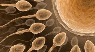 http://4.bp.blogspot.com/_qh0uqppR2V8/SsEDqYzTe5I/AAAAAAAAC60/xsz2ju-RVzY/s320/sperm+meni.jpg