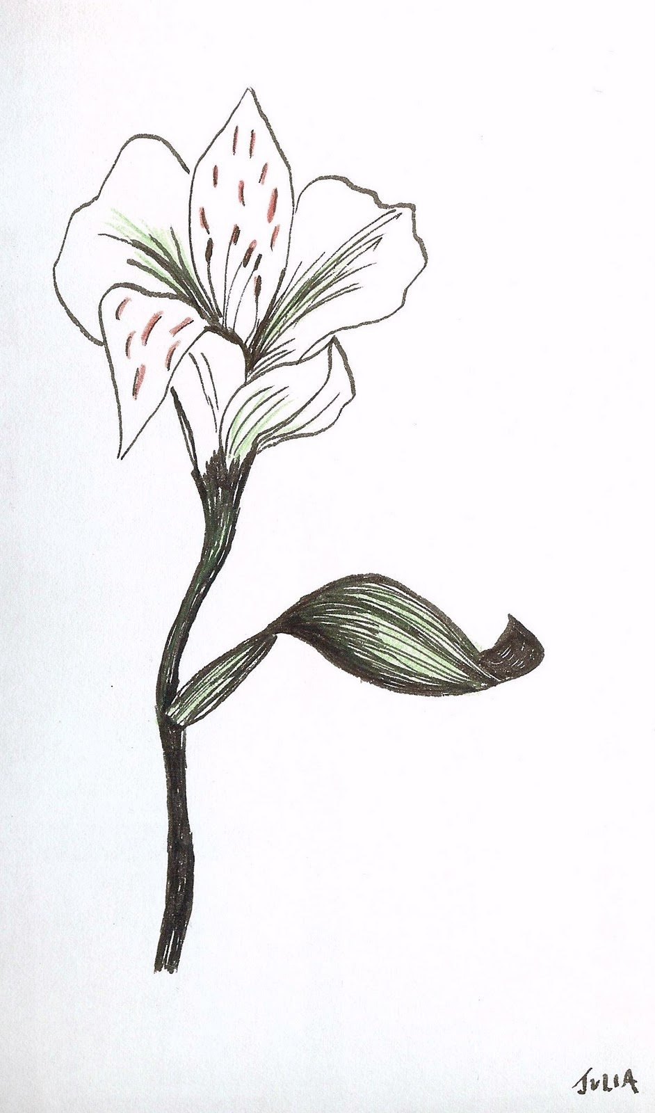 Paintersgarden asiatic lilies in pencil pen and ink for Ink drawings easy