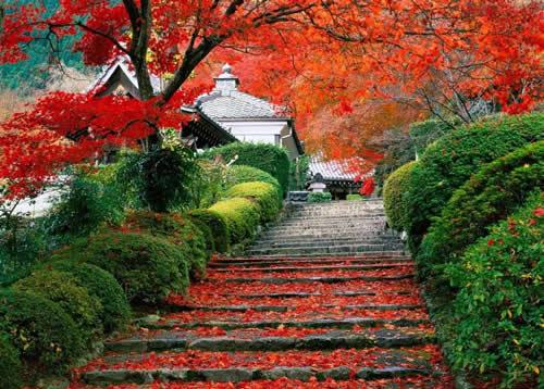 paisajes hermosos de la naturaleza. paisajes naturales hermosos.