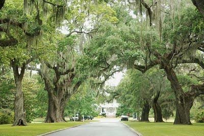 A Lowcountry Wedding Charleston Myrtle Beach Hilton Head 39 S Favorite Wedding Resource Part