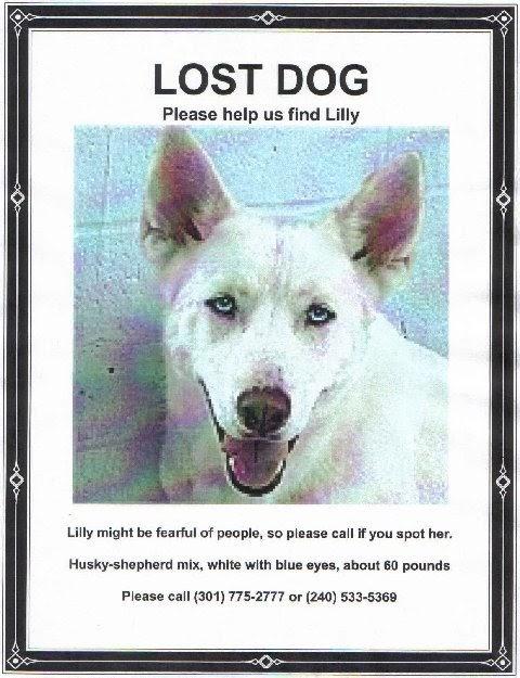 Lost Dog Animal Rescue Virginia