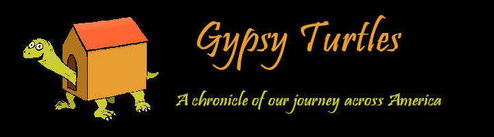Gypsy Turtles