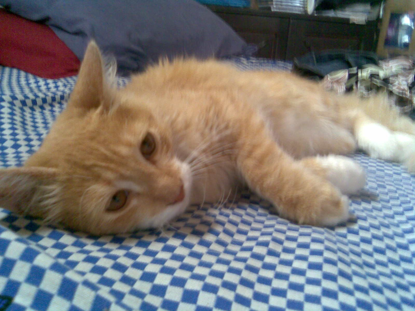 http://4.bp.blogspot.com/_qkIAqZWIIZQ/TCU1-YL_ZRI/AAAAAAAAAVM/MurDCLpy13w/s1600/Imagem057.jpg+gato.jpg