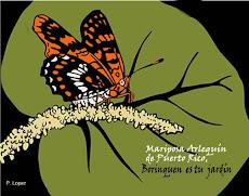 La mariposa arlequín: en peligro de extinción