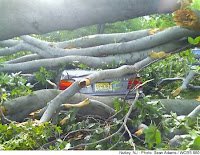 Click for slide show of Nutley NJ storm damage
