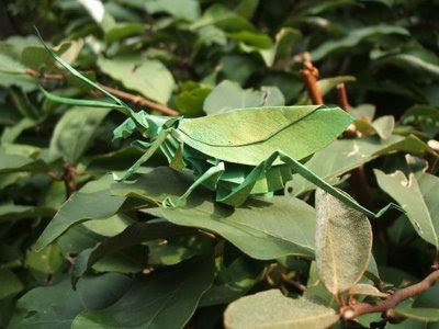 Origamis  (estan muy buenos) Insect_origami_41