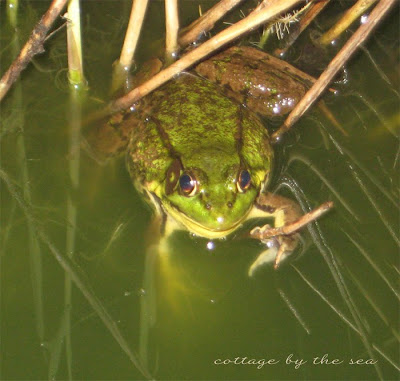 Image Result For Froggy Goes To