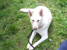Unser Hund Charlie