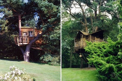 Creative Tree House Ideas around the world Seen On  www.coolpicturegallery.net