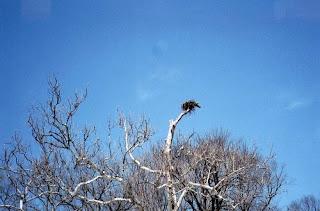 Osprey Nest, Mount Vernon