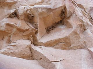 Bird nests near petroglyphs, DNM