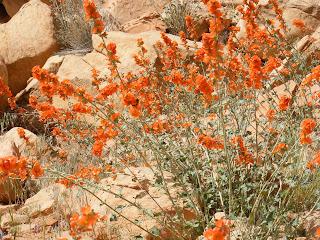 Flowers near Petroglyphs, DNM