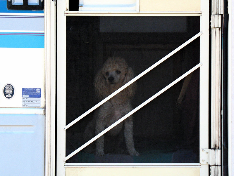 poodle in an rv; click for previous post