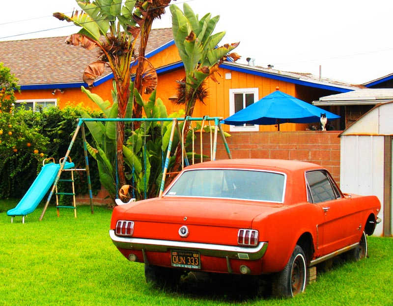 mustang in the yard; click for previous post