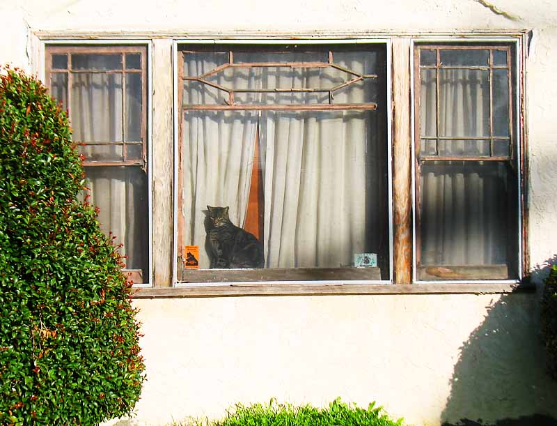 Cat in the window; click for previous post