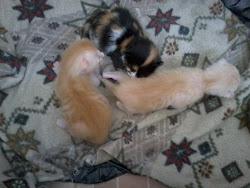 mes amis les chats!!