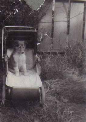 Lassie in Baby Carriage - 1952