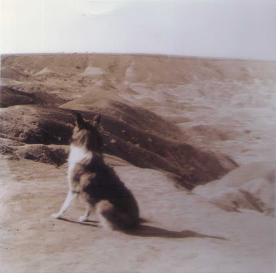 Lassie at the Painted Desert - 1955