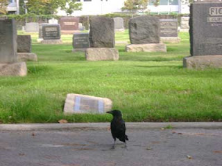 a Woodlawn crow