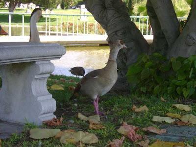 Coy Bird