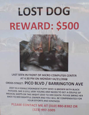 Lost Dog - Reward $500
