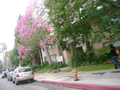 Barrington Avenue Southbound - Brentwood