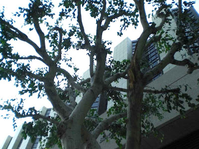 Cedars-Sinai Medical Center Tree - Los Angeles