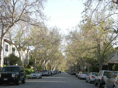 Lovely Tree-Lined Sycamore Street