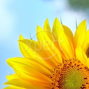 [blomst.jpg]