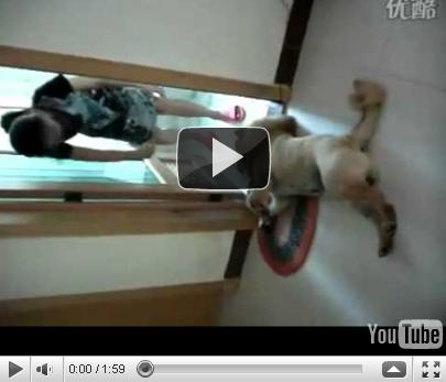 funny dogs video. Funny Dog Video