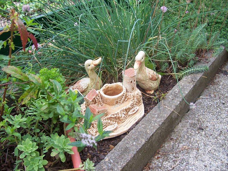 Promenade au jardin de lili dans le poitou amis du jardin 4 for Au jardin des amis