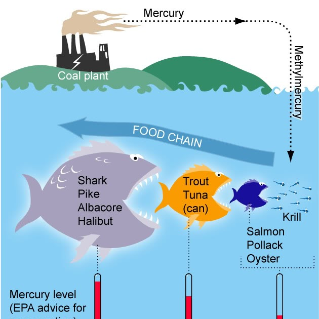 Ecomerge project seasonal food portland state for How does mercury get into fish