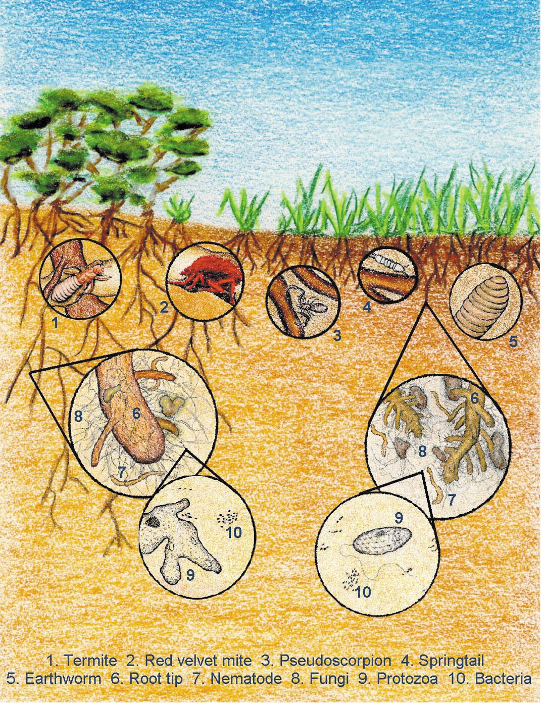 What are soil biota and what do they do for Things in soil